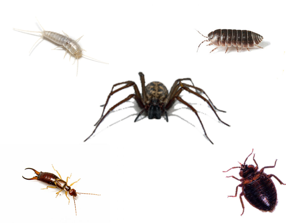 Crawling Insects Glebe Pest Control